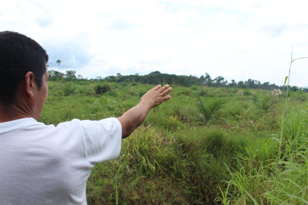 Presidente de la Comunidad Riveras del Punino, Maximiliano Moreno, muestra el terreno colindante a su finca, que ahora está plantado de palma y antes solía ser bosque. Foto: Daniela Aguilar.