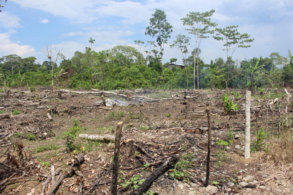 Sector talado en la comunidad Agrupación Payamino. Además de la palma, los campesinos talan el bosque que tienen dentro de sus fincas para sembrar productos de ciclo corto. Foto: Daniela Aguilar.