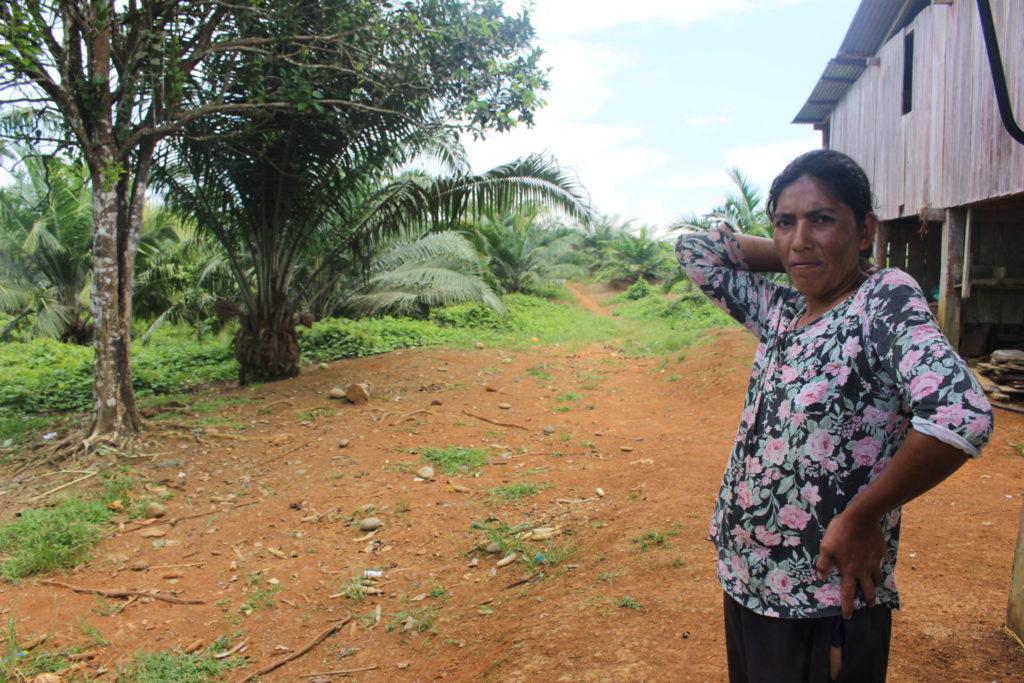 n Bricio muestras sus sembríos de palma. Junto a su esposo ingresó a cultivo de esta fruta hace cinco años pero no les ha ido bien. Foto: Daniela Aguilar.