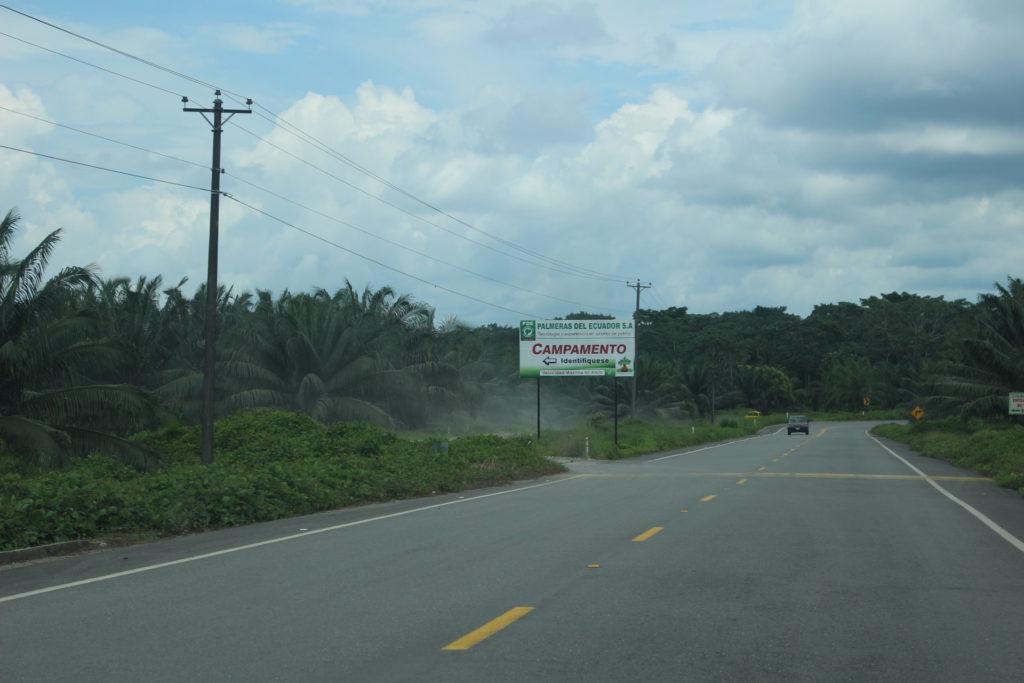 Vía a Puerto Providencia, parte del eje Manta-Manaos que inauguró el presidente Correa hace alrededor de tres años. La carretera bordea las plantaciones de la empresa Palmeras del Ecuador.
