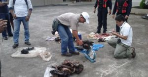 Decomiso de carne de guanta y mono en mayo de 2012 en Orellana por parte del Ministerio de Ambiente.
