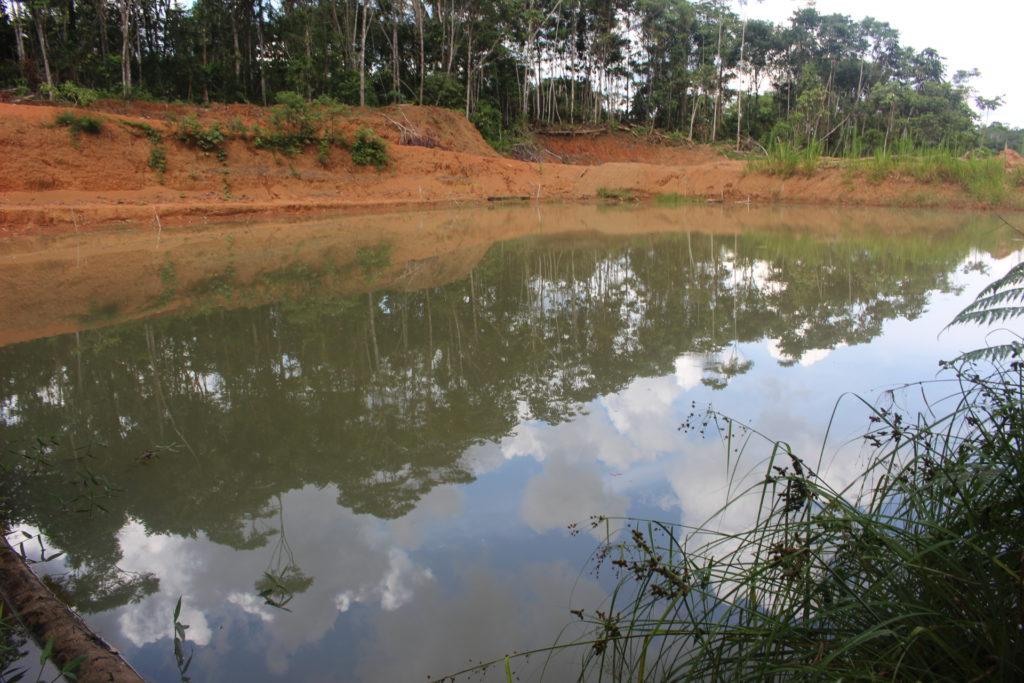 Así quedó piscina de desechos petroleros de 50 x 50 metros que remedió Amazonía Viva en Pacayacu.