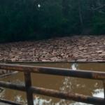 Alerta en la Amazonía: madereros arrasan en medio de la pandemia